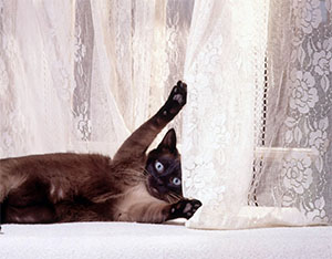 Кошки и шторы