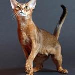Безопасность глазами кошки-заключение