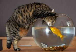 Рыба и кошка