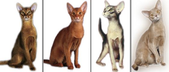 Персидской кошки у кошки облезл живот