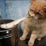 Кошку нельзя кормить рыбой
